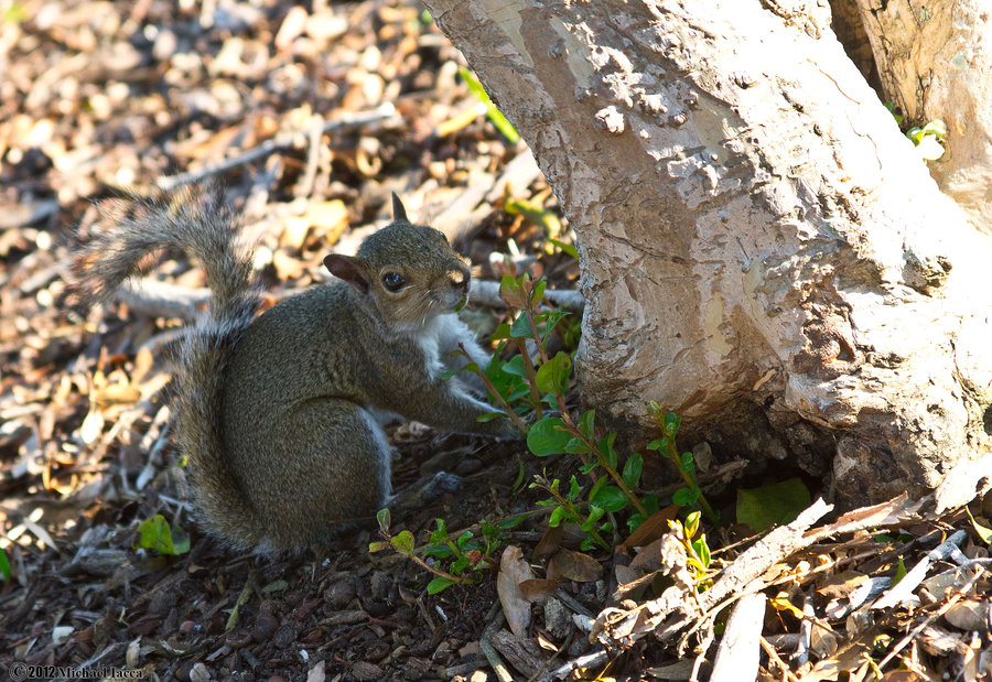 cute, squirrel, nice, animal, tree, pics