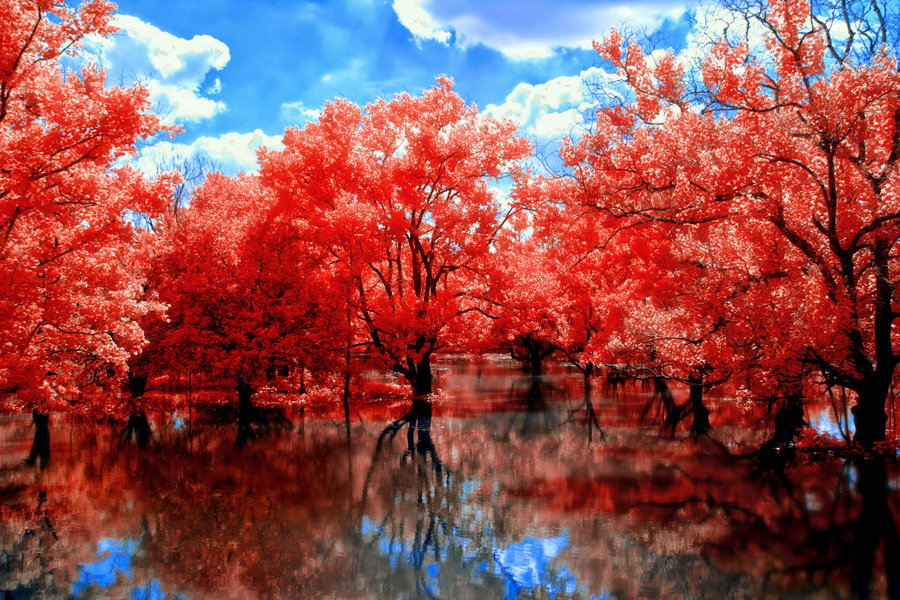 fall, red, trees, water, wonderful, view
