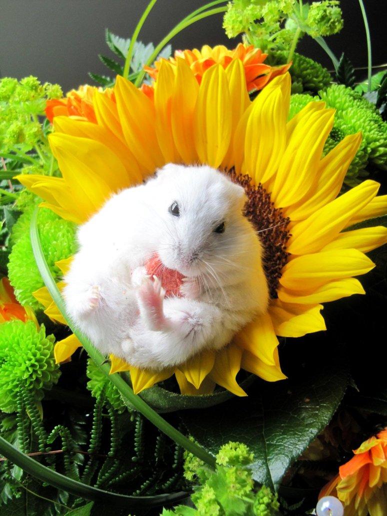 white, animal, sunflower, nice, rat, picture