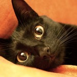 black, cat, animals, eyes, look, stare
