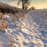 snow, sunrise, morning, winter, nottinghamshire, rural, nottingham