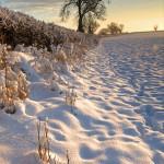 snow, sunrise, morning, winter, nottinghamshire, rural, nottingham