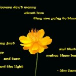 jim carrey, quotes, sayings, flower, bloom, awesome quote
