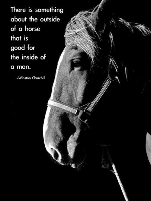 winston churchill  quotes  sayings  on horse  brainy quote
