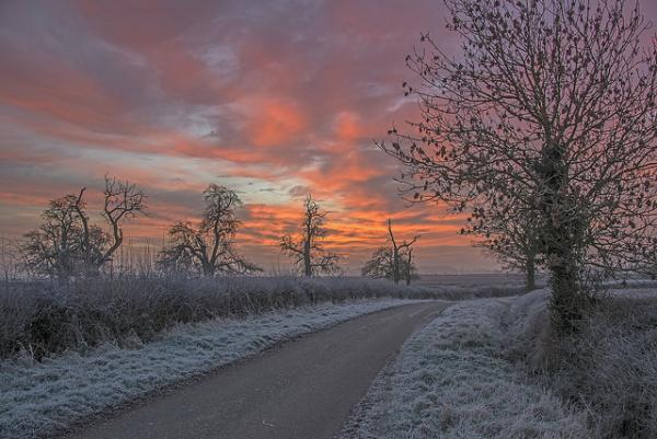 cold, morning, sunrise, frosty, grass, winter, landscape