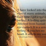 heart, touching, quotes, sayings, look into animal eyes