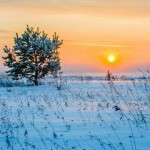winter, sunset, sun, tree, snow, cold, landscape, siberia