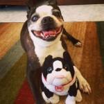 amazing, awesome, cute, animals, funny, dog, toy