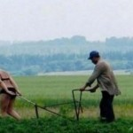 crazy, russian, funny, picture, agriculture