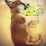 funny, amazing, cute, animals, pets, dog, toy