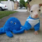 funny, cute, animals, creatures, puppy, toy