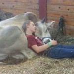 funny pictures, images, fun, amazing, nice, man, cow, sleep