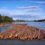 wood, fraser river, vancouver, bc, canada, log