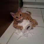 funny animals, cute, awesome, fun, ginger cat