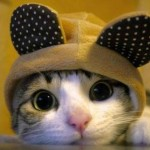 funny animals, humor, cute, cat, hoody