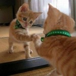 funny animals, humor, cute, cat, mirror