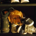 funny animals, humor, cute, dog, footwear