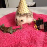 funny animals, humor, cute, hedgehog