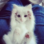 funny animals, humor, cute, white cat