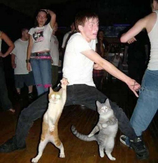 cat, birthday, parties, positive, image