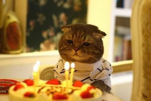 cat, birthday, parties, positive