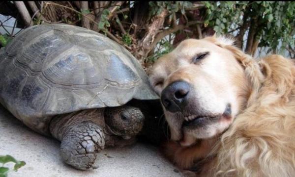 Humour Cute Amazing Animals Pets Turtle Dog Fav