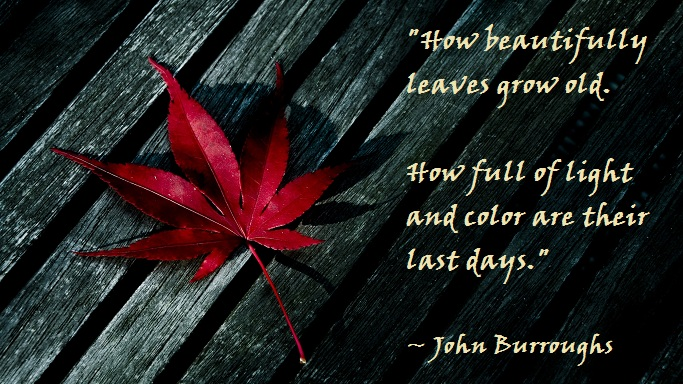 John Burroughs Quotes and Sayings, cute, awesome