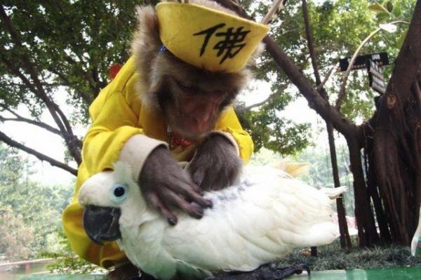 unusual animal friendship, monkey, bird