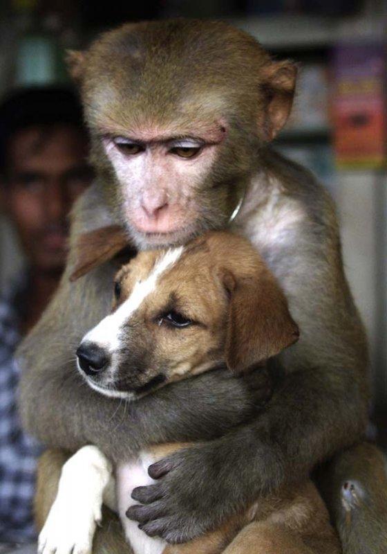 unusual animal friendship, monkey, dog, cute