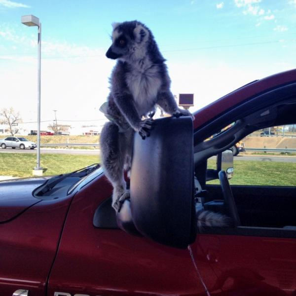 Cute and funny pets, animals, awesome, car