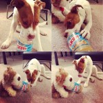 Cute and funny pets, animals, awesome, eating dogs, toy