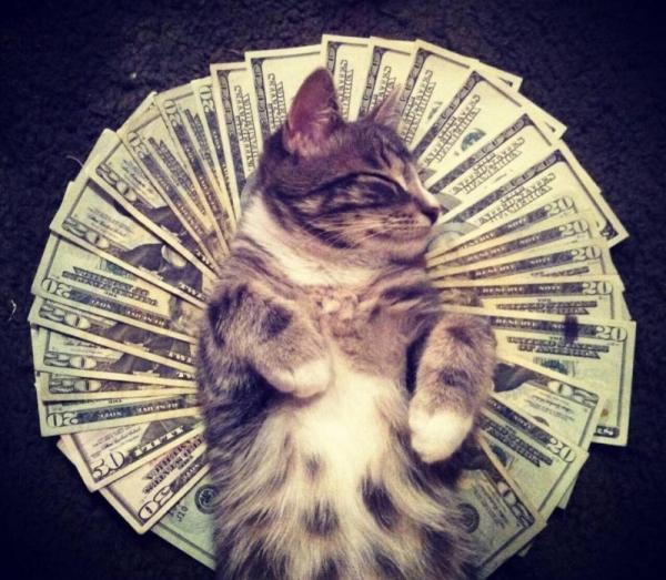 Funny pictures, ridiculous, cat, money