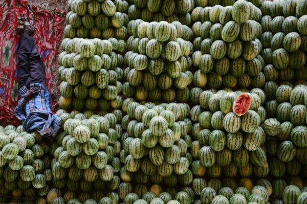 Jolly photography, positive, man, watermelons