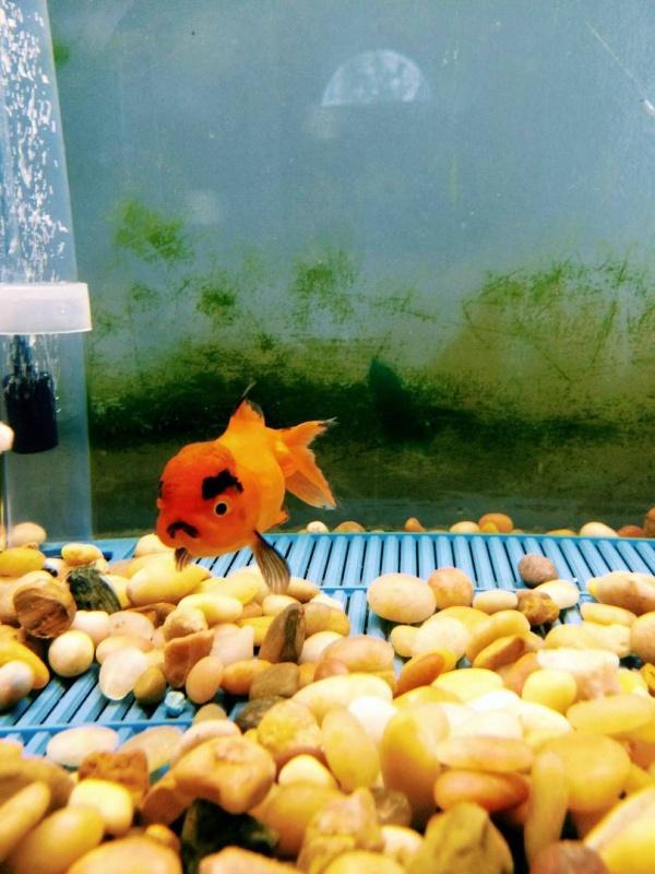 Jolly photography, positive, nice fish
