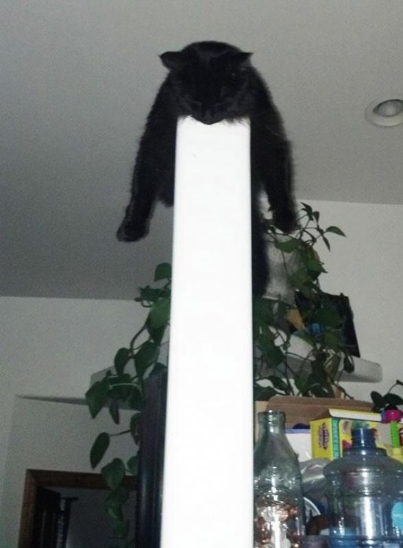 Sleeping cats, funny, pet, positive, black cat