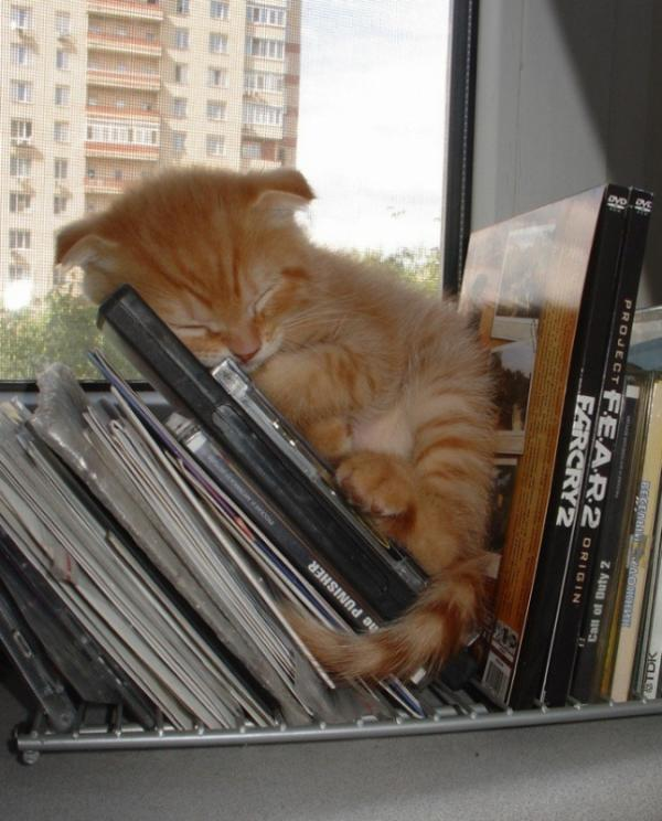 Sleeping cats, funny, pet, positive, kitty