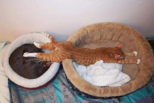 Sleeping cats, funny, pet, positive, red