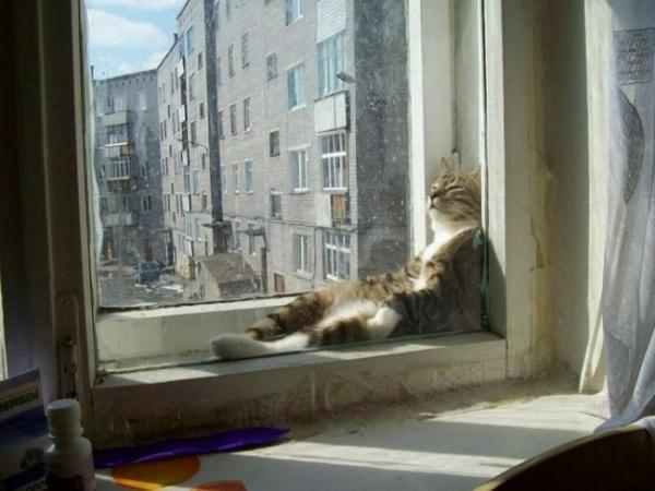 Sleeping cats, funny, pet, positive, window