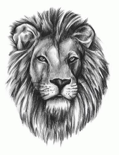 Lion tattoo designs 1