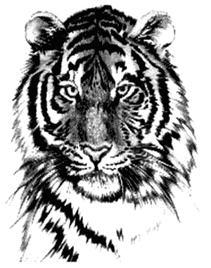 tiger tattoo designs 5