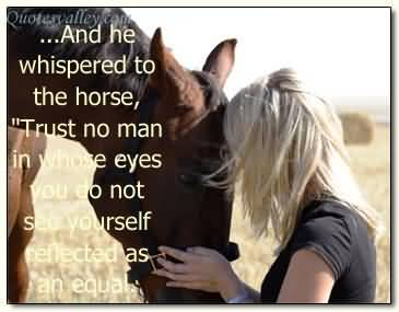 horse sayings 1