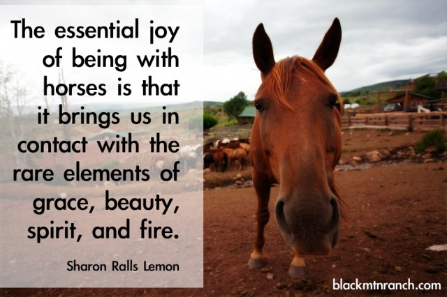 horse sayings 4