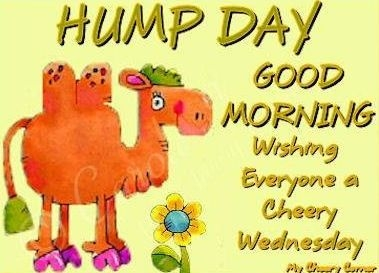 hump day quotes 2