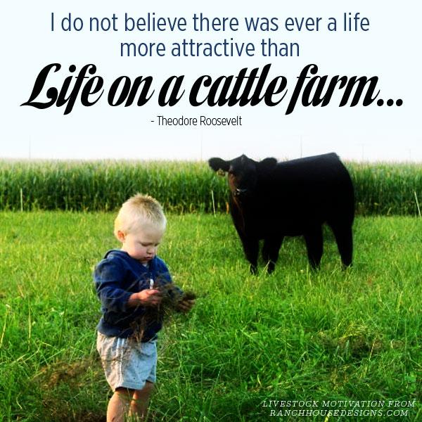 livestock quotes 4