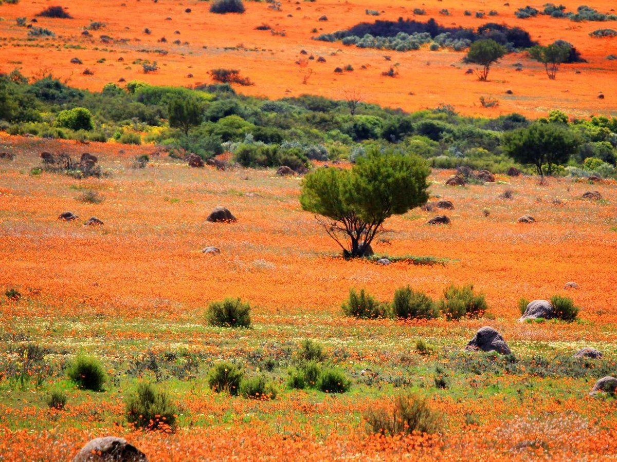 Namaqualand, arid region of Namibia and South Africa