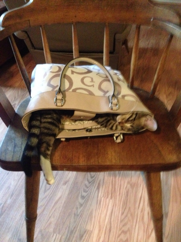 Amazing and funny cat in the bag