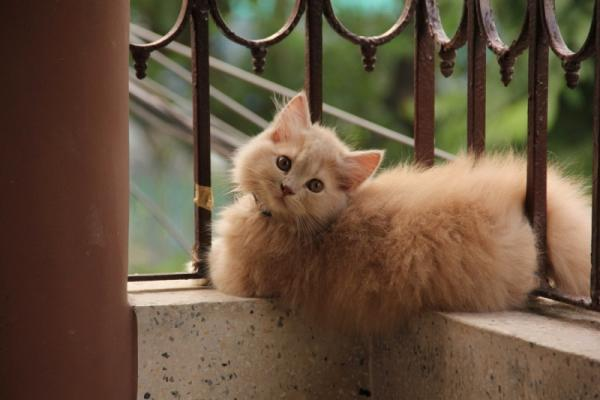 Amazing and funny fluffy kitty
