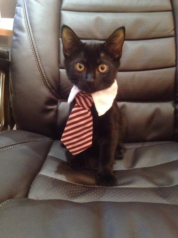 Black and intelligent cat