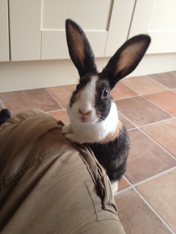 Cute and curious rabbit