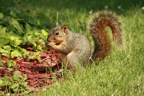 Cute squirrel has a breakfast